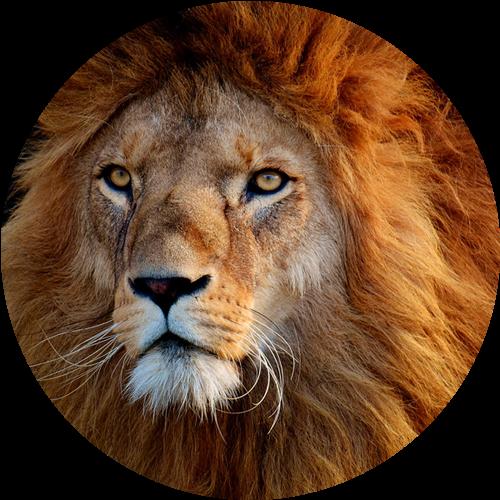 ライオン先輩